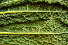 Alkaline, healthy food : kale leaves details Stock Photos