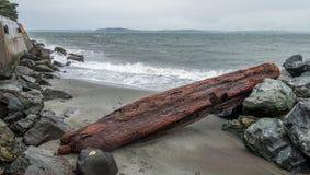 Alki Shoreline - Logs 2 Stock Image