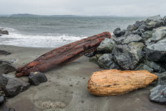 Alki Shoreline - Logs Stock Photography
