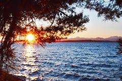 Alki Sunset Through Tree photos stock