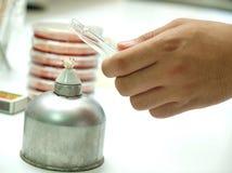 Alkohol lampa w mikrobiologii lab Obraz Stock