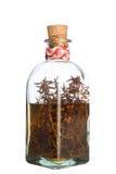 Alkoholisches Getränk des Rosmarins Lizenzfreie Stockbilder