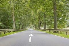 Allée avec de vieux arbres grands Image libre de droits