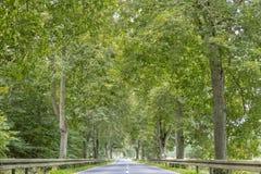 Allée avec de vieux arbres grands Photos libres de droits