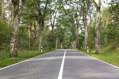 Allée avec de vieux arbres grands Images libres de droits