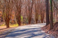 Allée avec des arbres d'eucalyptus en parc de Lullwater, Atlanta, Etats-Unis Photographie stock libre de droits