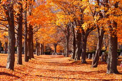 Allée chez Cedar Grove Cemetery Photo stock