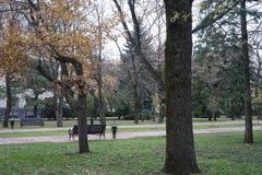 Allée couverte d'arbres verts des deux côtés avec des nuances à travers la route images stock