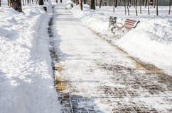 allée couverte de neige en parc pendant l'hiver photo libre de droits