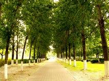 Allée d'arbre Photos libres de droits