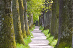 Allée d'arbre image libre de droits
