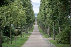 Allée d'arbre au palais de Fredensborg, Danemark photographie stock libre de droits