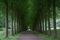 Allée d'arbre au palais de Fredensborg, Danemark images stock