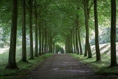 Allée d'arbre au palais de Fredensborg, Danemark photo stock