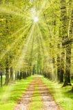 Allée d'arbre avec les rayons lumineux du soleil images stock