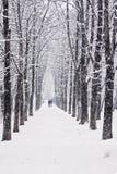 Allée d'arbre de l'hiver Photographie stock libre de droits