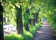 Allée d'arbre en été Photographie stock