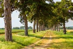 Allée d'arbre en été avec le sentier piéton Photo libre de droits