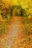 Allée d'automne Photographie stock