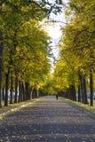 Allée d'automne avec des arbres et des feuilles tombées jaunes photo stock