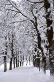 Allée d'hiver images stock