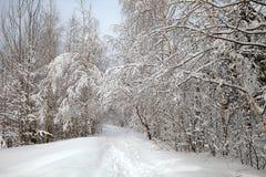 Allée d'hiver images libres de droits