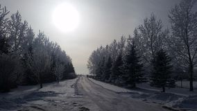 Allée d'hiver Photo libre de droits