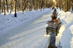 Allée d'hiver Photos libres de droits