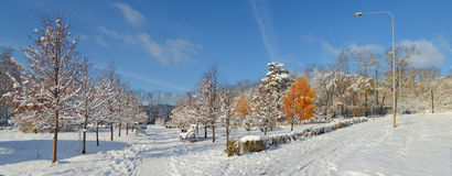 Allée d'hiver des arbres, Novokuznetsk Sibérie, Russie Photographie stock