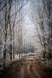 Traînée de forêt d'hiver Photographie stock libre de droits
