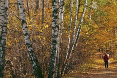 Allée dans la forêt d'or Images libres de droits