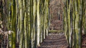 Allée dans le jardin de château, Alnarp Photographie stock libre de droits