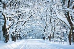 Allée dans le matin neigeux Photos libres de droits