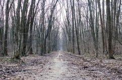 Allée dans une forêt rampante pendant l'hiver en retard avec les feuilles putréfiées Photos libres de droits