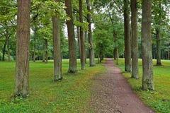 Allée de chêne en parc d'été Photographie stock libre de droits