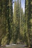 Allée de Cypress un jour ensoleillé d'hiver Photo stock