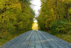 Allée de forêt un beau jour d'automne image stock