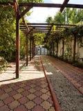 Allée de jardin Photo libre de droits