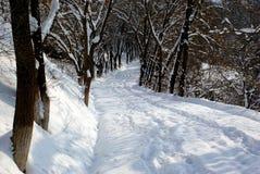 Allée de l'hiver images stock