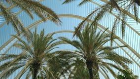 Allée de palmiers un jour ensoleillé d'été, vue d'angle faible Valence, Espagne photographie stock libre de droits