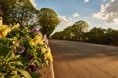 Allée de parc au coucher du soleil sur le ciel bleu photographie stock
