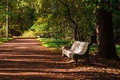 Allée de parc avec des bancs Photo libre de droits