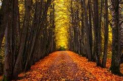 Allée de parc d'automne Arbres lumineux d'automne et feuilles d'automne oranges photo libre de droits