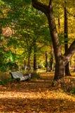 Allée de parc d'automne avec le banc Photographie stock libre de droits
