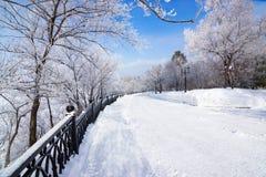 Allée de parc d'hiver avec les arbres givrés Photo libre de droits