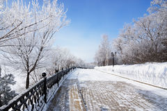 Allée de parc d'hiver avec les arbres givrés Photos stock