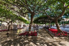 Allée de passage couvert des arbres à feuilles persistantes en Santa Cruz de Tenerife Canar Photos libres de droits