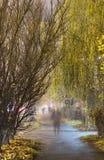 Allée de saule avec des fantômes photographie stock