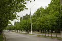 Allée de vert de Goroskaya Avenue de ressort image stock