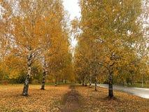 Allée des arbres avec les feuilles jaunes photo stock